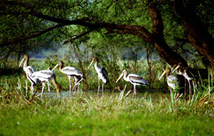 Bharatpur City Tour